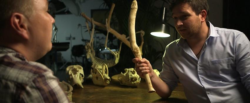 Kenapa Manusia Gak Punya Tulang Penis? Ini Jawabannya!