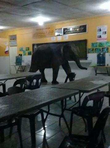 VIDEO : Gajah liar 'lawat' kantin sekolah  (MALAYSIA)