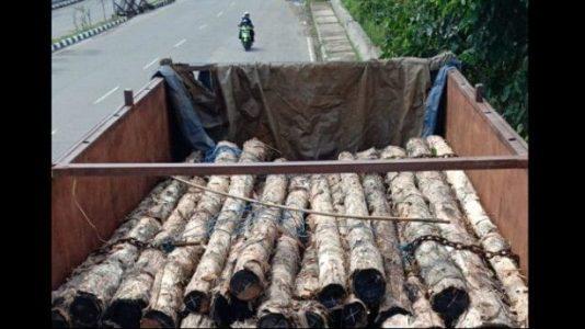 Polres Paser Tangkap Pencuri Kayu Hasil Hutan Cagar Alam Paser