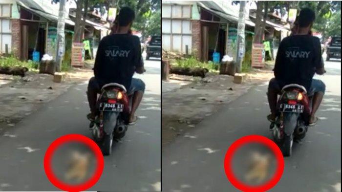 Kejam ! 2 Pemuda di Pekalongan Ikat Leher Kucing Kemudian Diseret Pakai Motor