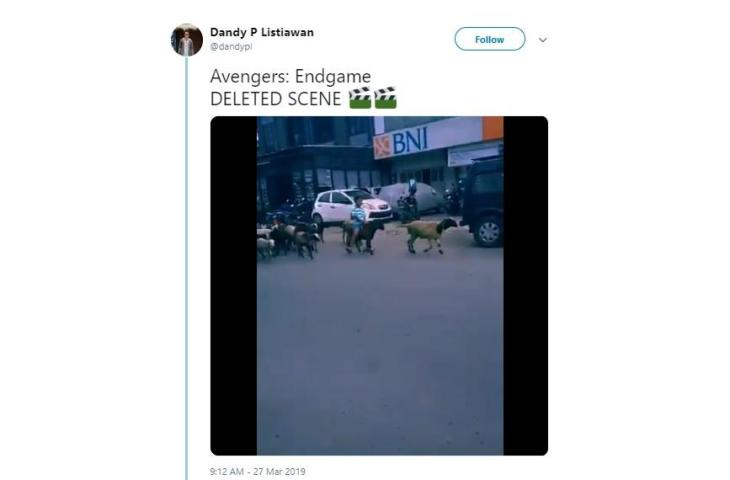 Video Bocah Bersama Gerombolan Kambing Di Jalan Raya Ala Avangers