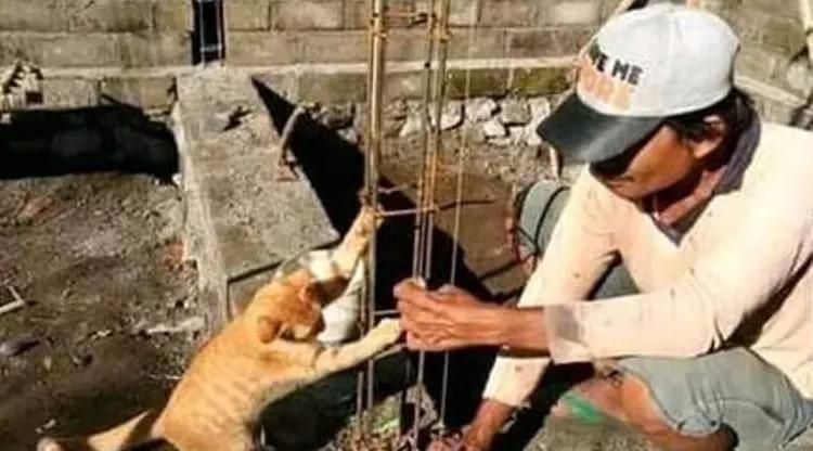 7 Aksi Kucing yang Bikin Gemas, Ikut Campur Pekerjaan Manusia