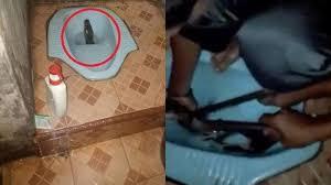 VIDEO : Ular Piton Sepanjang 3 Meter Muncul di Toilet Rumah Warga