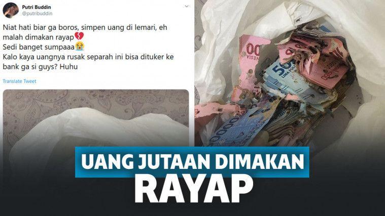 Kisah  Uang Jutaan Rupiah  Hancur Dimakan Rayap