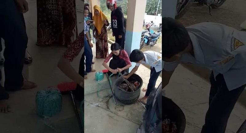 Video Viral, Ibu Guru di Sulbar Tangkap Ular Piton dengan Tangan Kosong